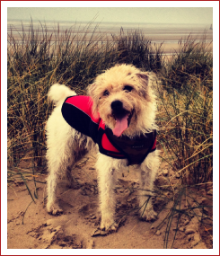 Oscar in the Sand Dunes