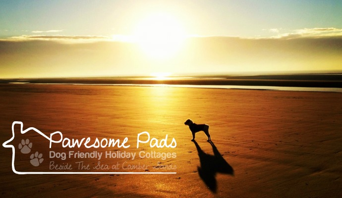 Dog friendly camber holiday cottages