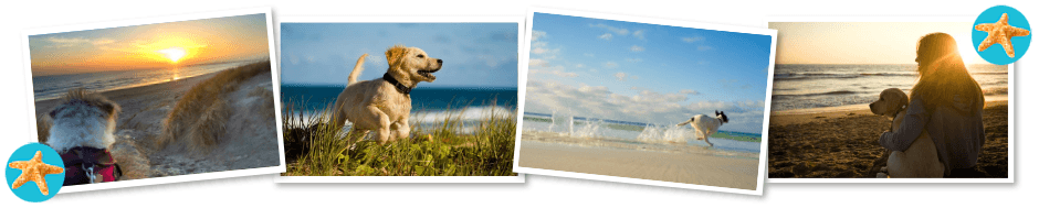 dog friendly camber sands