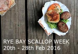 rye scallop week 2016