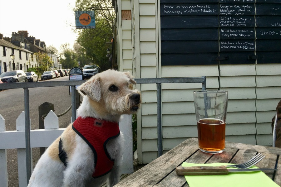 oscar enjoying a pint