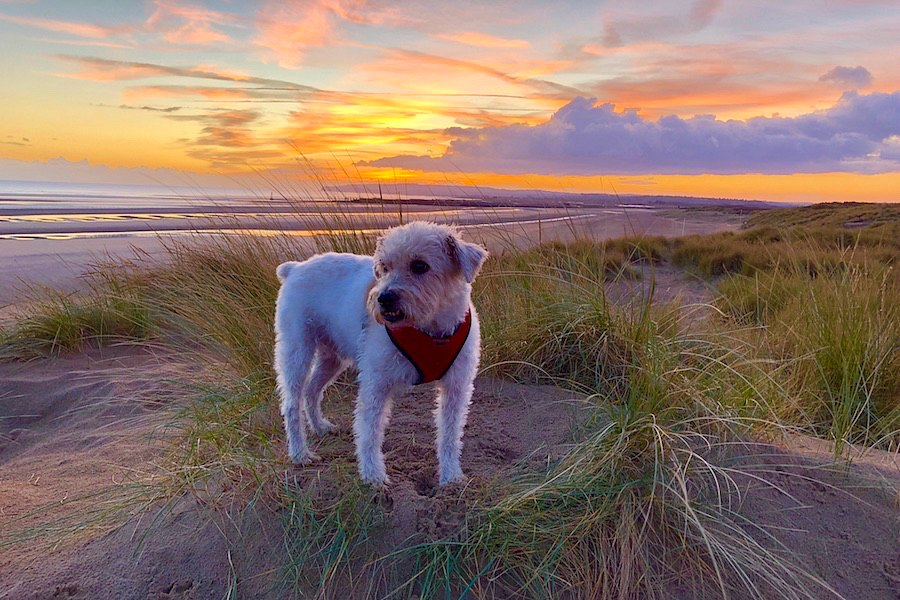 Dog-Friendly Beaches in East Sussex