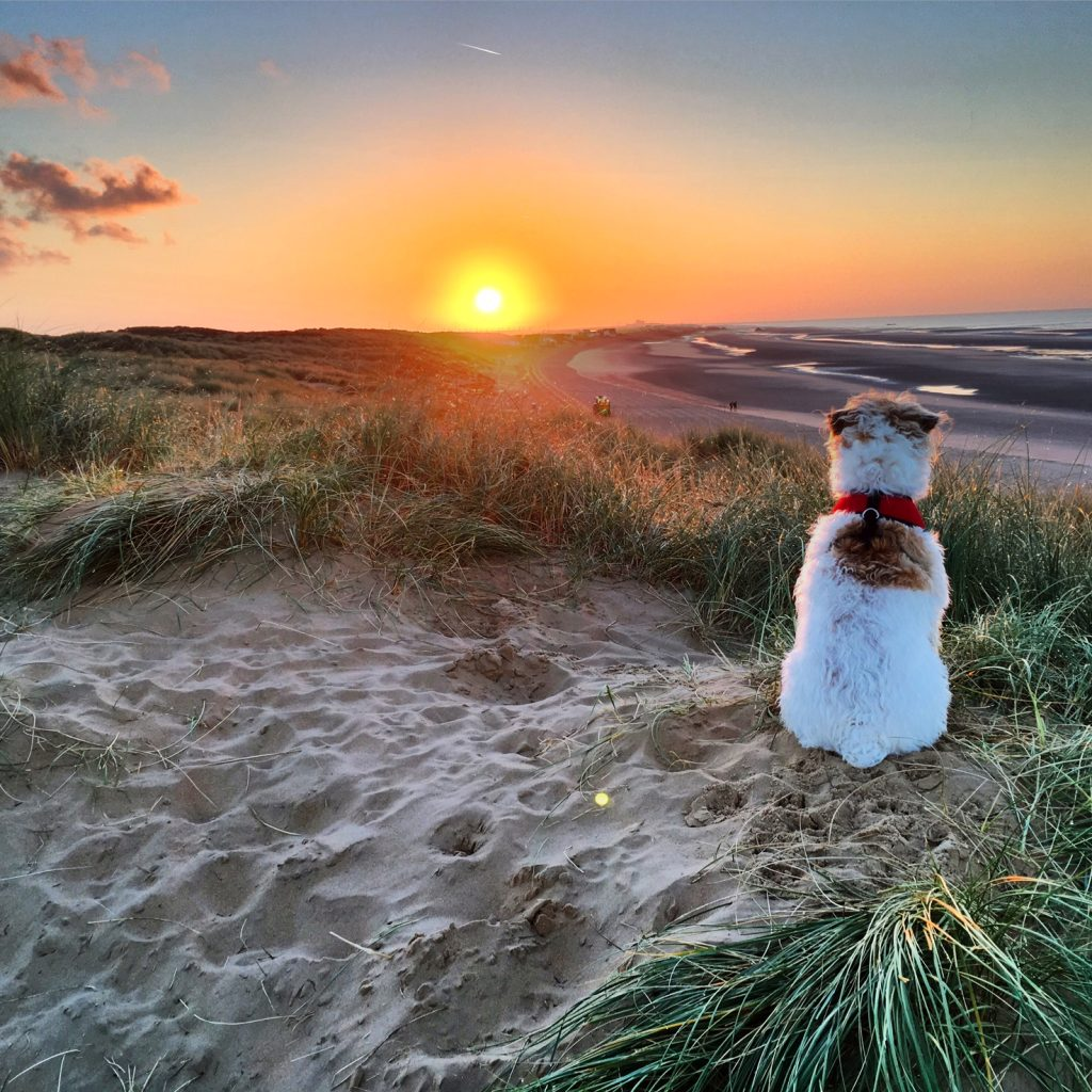 Oscar watching the sunrise at Camber Sands