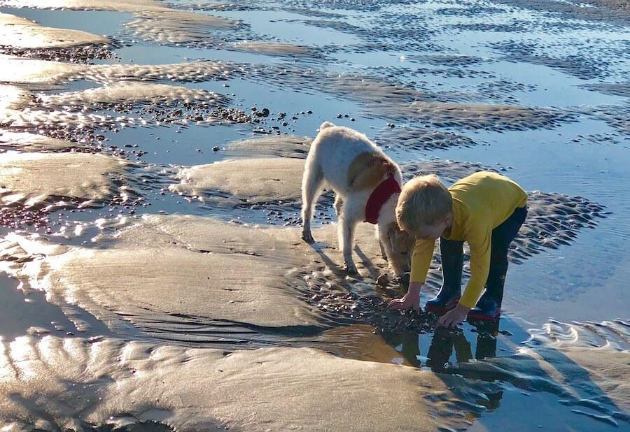 beach combing camber sands
