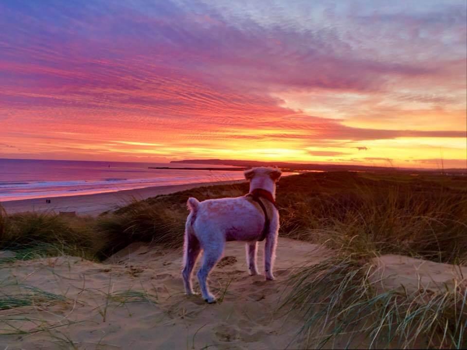 Oscar on the beach in Camber Sands