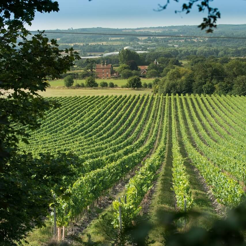 East Sussex winery tours