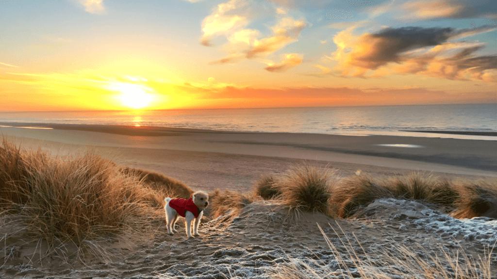 Pet friendly long weekend breaks East Sussex