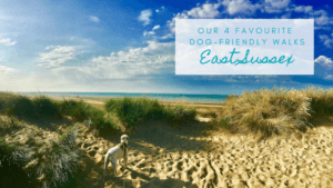 4 of our favourite dog walks in East Sussex