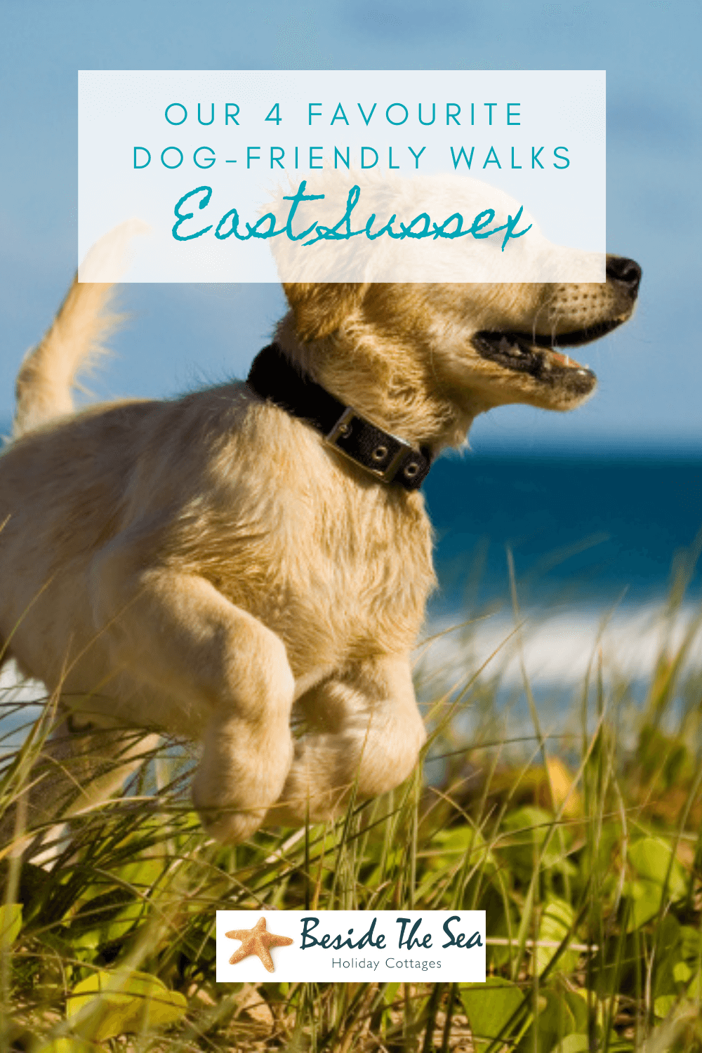 Dog friendly walks in East Sussex are one of the best ways to explore he beautiful and diverse scenery on the coast and inland.